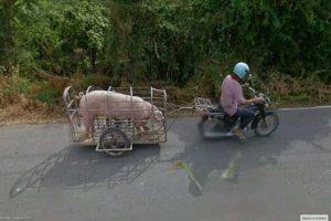 """""""Mi amor, saqué a pasear al… cerdo"""" Foto:@VistoEnMaps. Imagen Por:"""