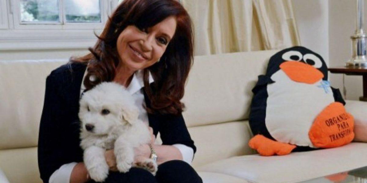 Nueva mascota de Sra. K: Simón arrasa en las redes sociales