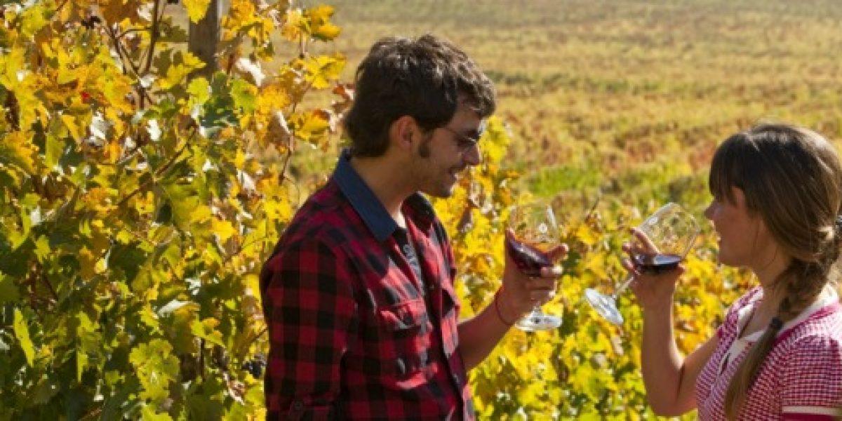 Crece el turismo en las viñas del país