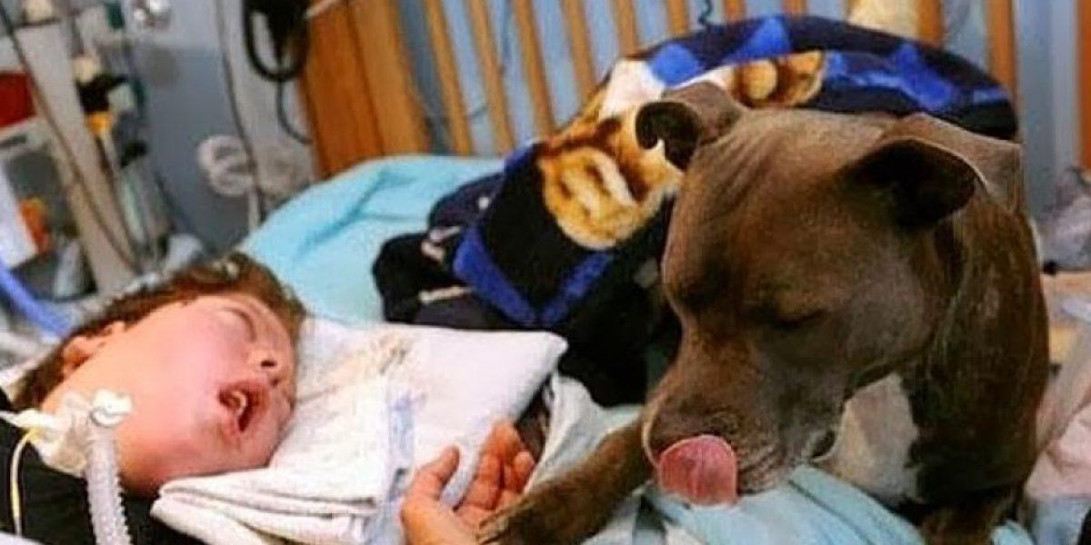 [FOTOS] La historia entre un niño en estado vegetal y su perra que conmueve a Facebook