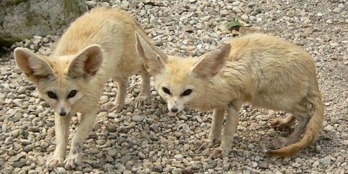 GALERIA: Los ocho animales más tiernos del 2013