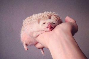 Foto:darcytheflyinghedgehog. Imagen Por: