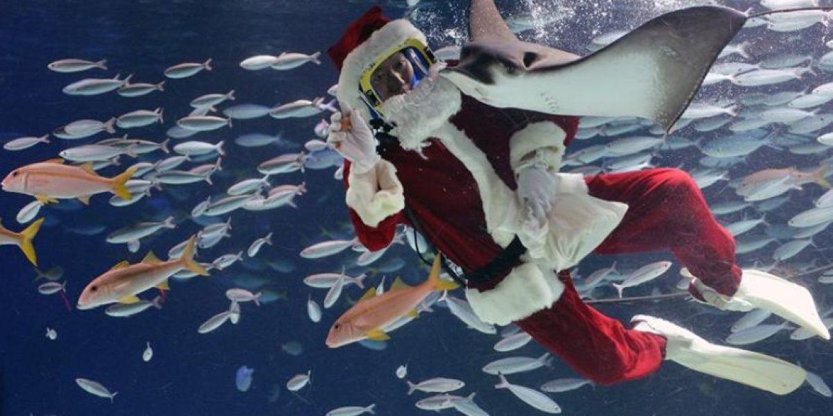 Galería: Mujer se viste de Santa Claus y nada en un tanque de peces