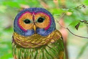 Photoshop creó esta especie rara de búho arcoiris. Foto:Blog Ceslava.com. Imagen Por: