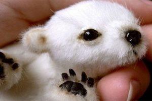 Este bebé de oso polar es en realidad un juguete. Foto:Blog Ceslava.com. Imagen Por: