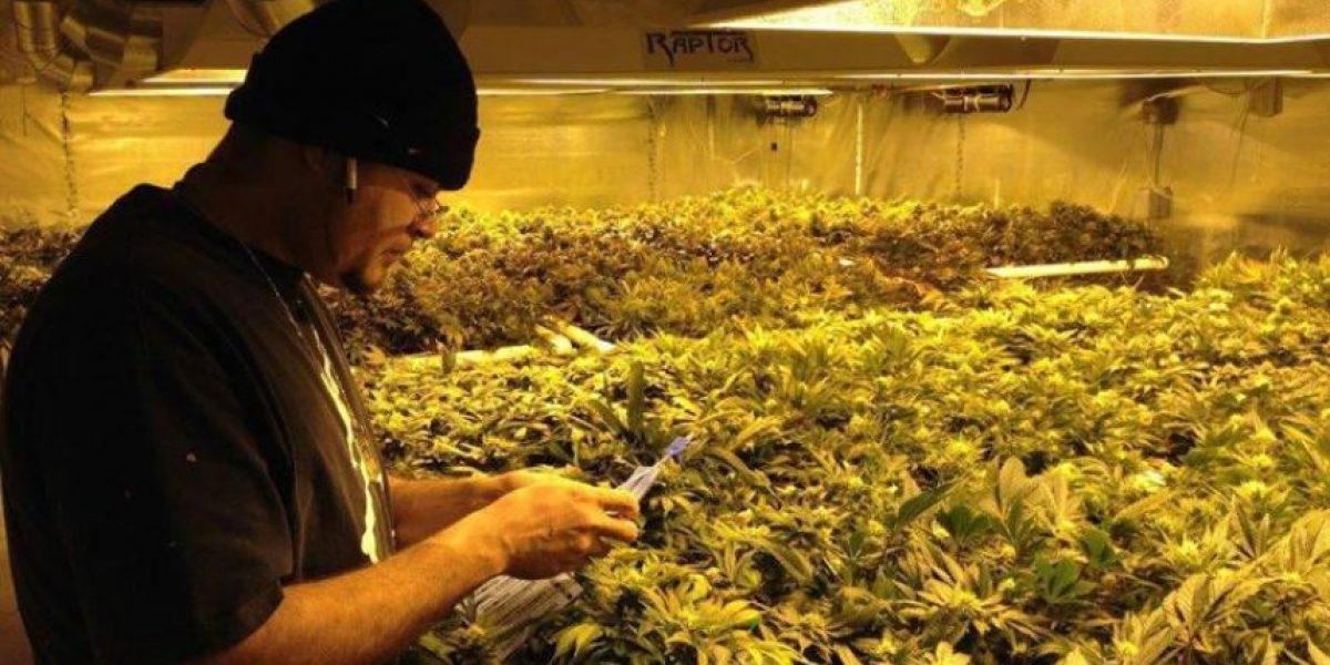 En EEUU está el primer lugar del mundo donde se vende marihuana para uso recreativo