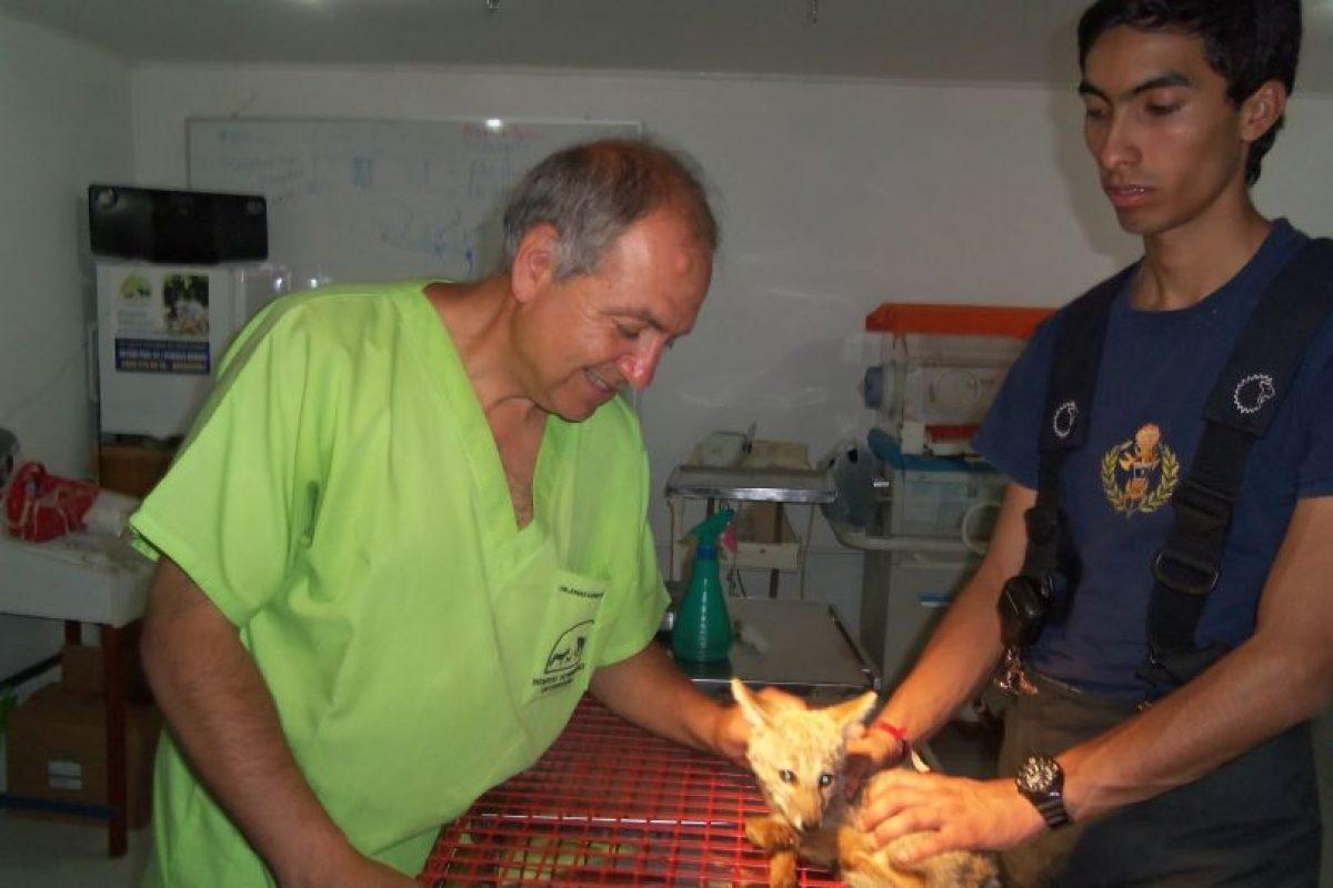 Foto:Gentileza Hospital Veterinario de Curauma -Placilla. Imagen Por: