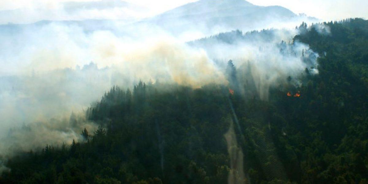 Fotos: Incendio forestal afecta a comuna del Bio Bío