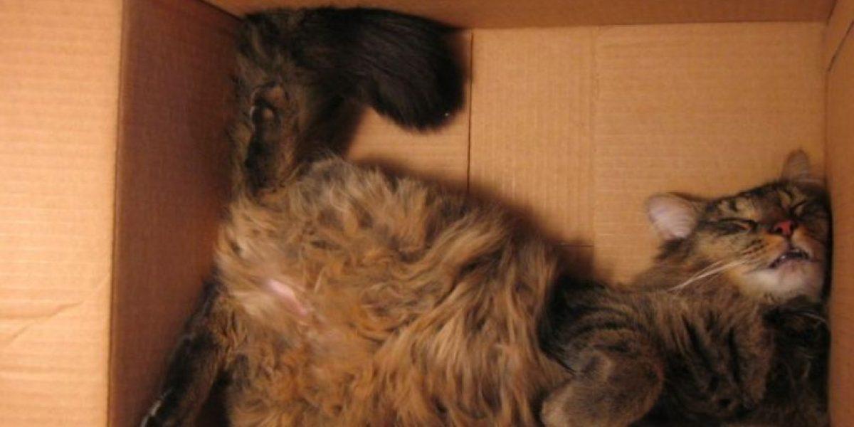 FOTOS: Gatos durmiendo en las posiciones más extrañas