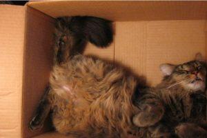 Foto:Foto: littlewhitelion.com. Imagen Por:
