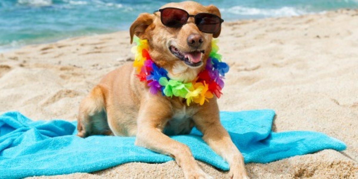 Cuando las mascotas también van de vacaciones