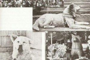 El Hachiko original: vivió durante 11 años, de 1924 a 1935 Foto:tumblr.com. Imagen Por: