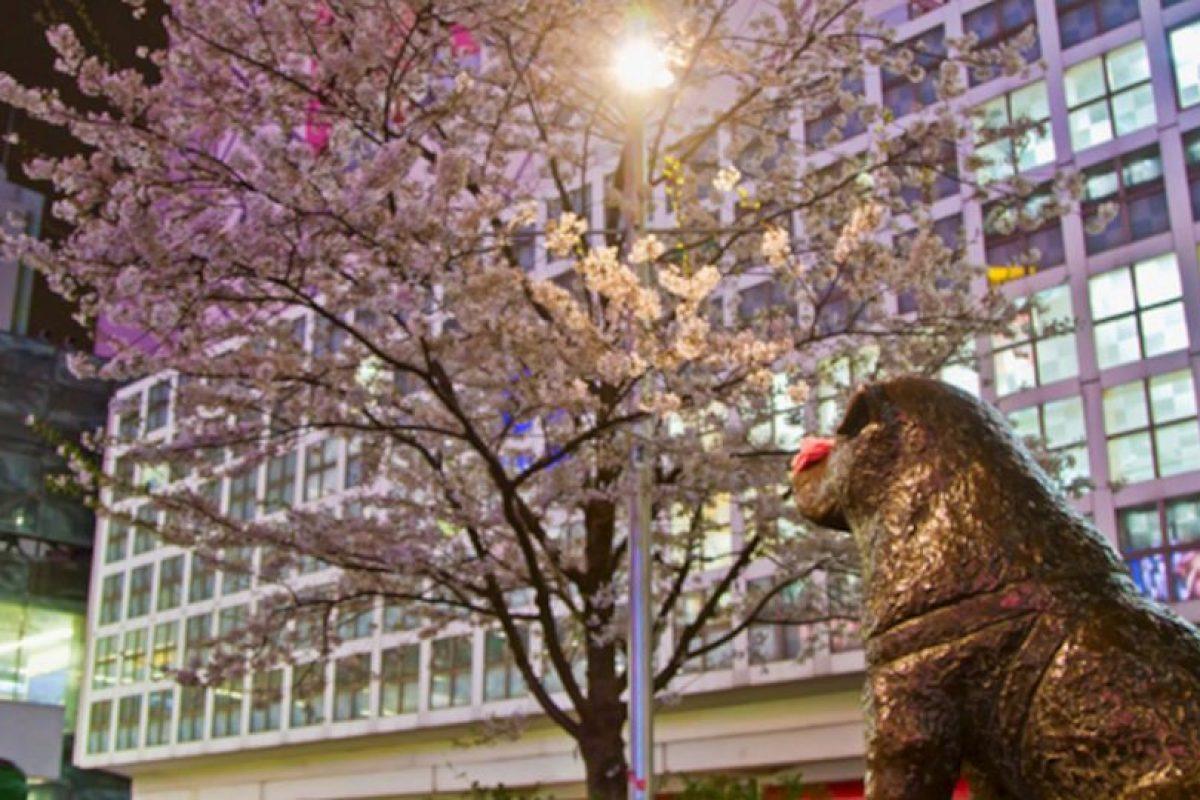 Se puso una estatua en el sitio en donde Hachiko esperaba Foto:tumblr.com. Imagen Por: