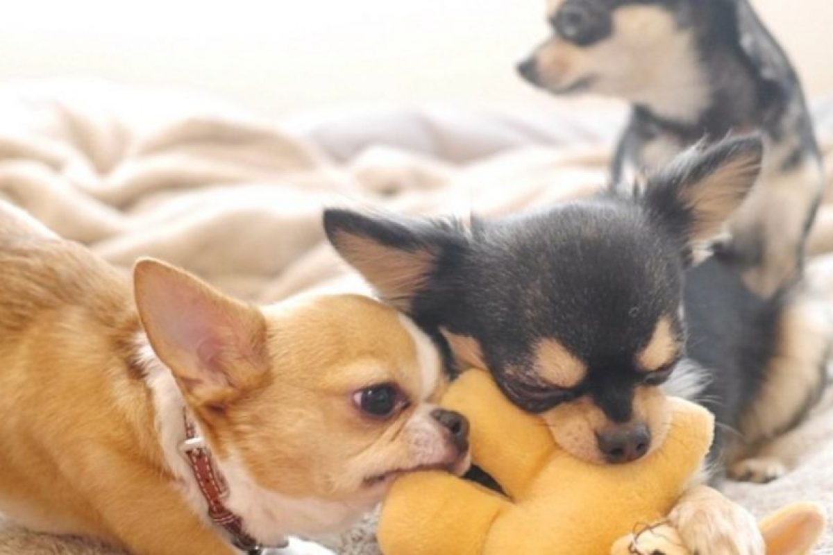 Cuando alguien los ataca, pueden defenderse en grupo Foto:tumblr.com. Imagen Por: