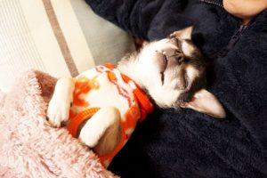 Y seguir durmiendo Foto:tumblr.com. Imagen Por: