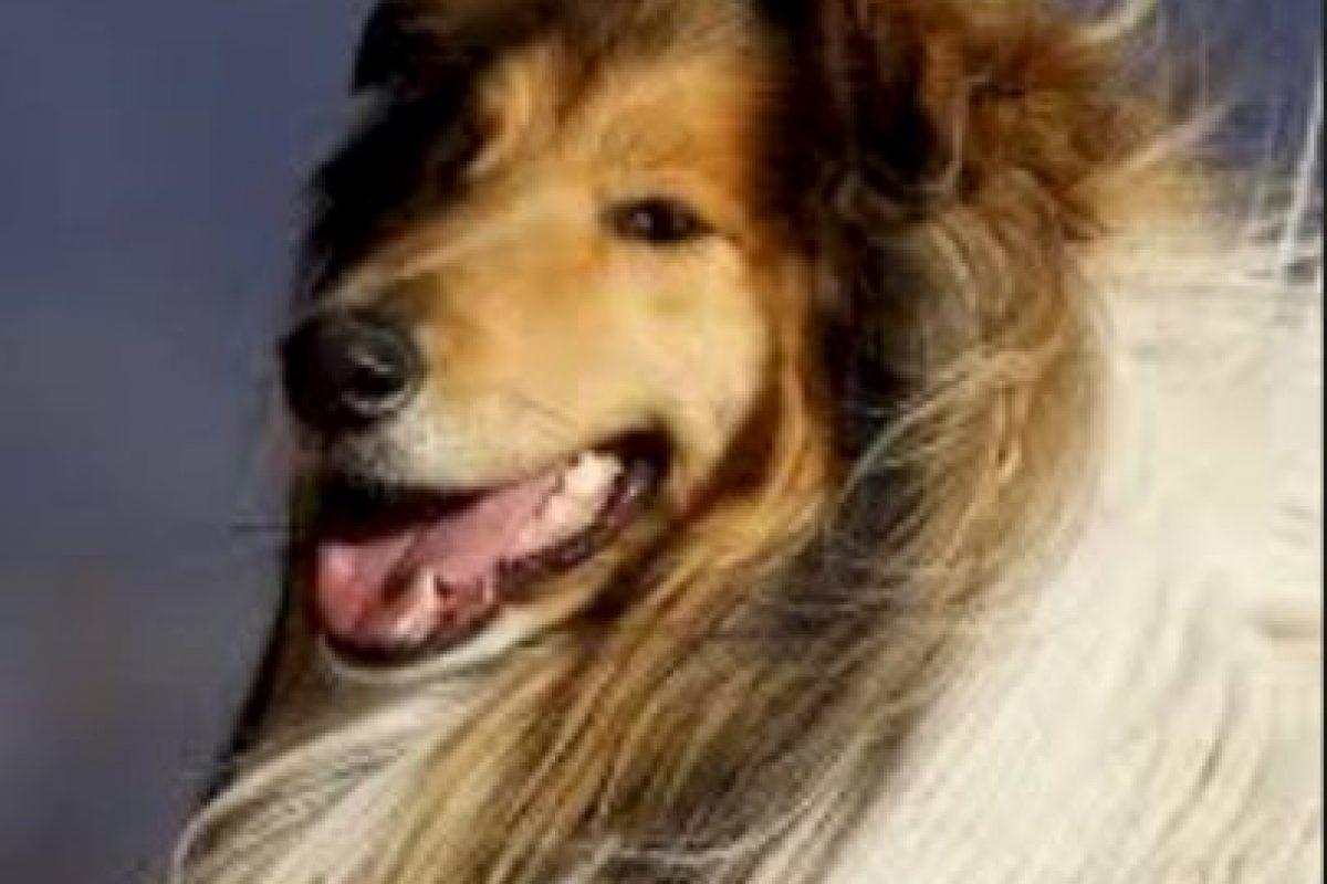 Cómo lo conoce la gente: Lassie Foto:Flickr Image. Imagen Por: