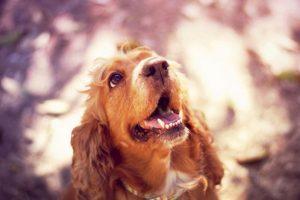 Cómo lo conoce la gente: perro de las películas de Disney Foto:Flickr Image. Imagen Por: