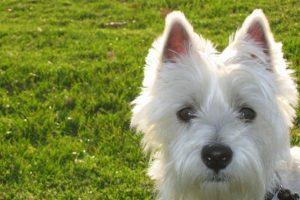 Cómo lo conoce la gente: el perro cariñoso. Foto:Flickr Image. Imagen Por: