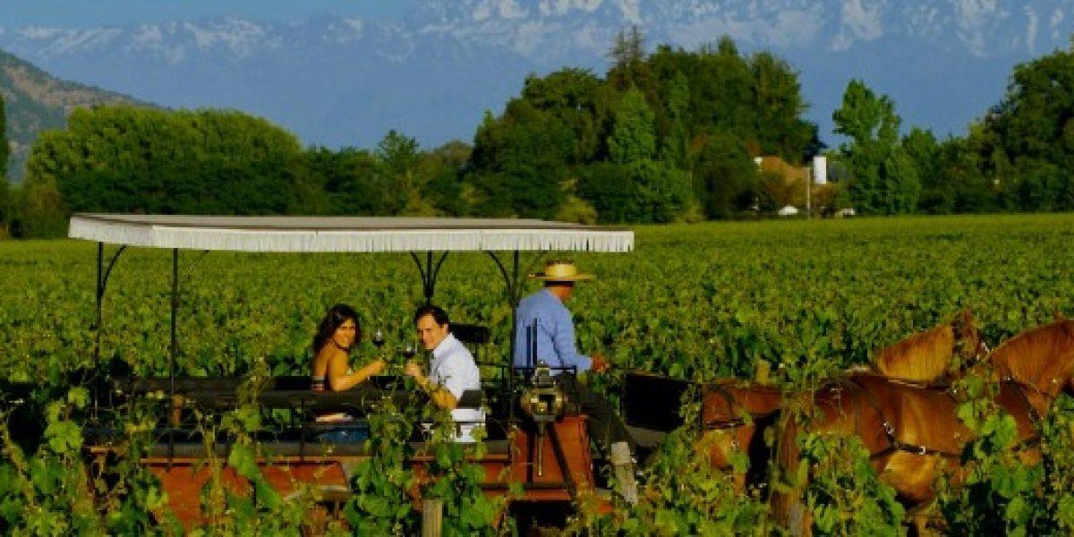 Colchagua es el valle de Chile con más premios en concursos internacionales de vinos