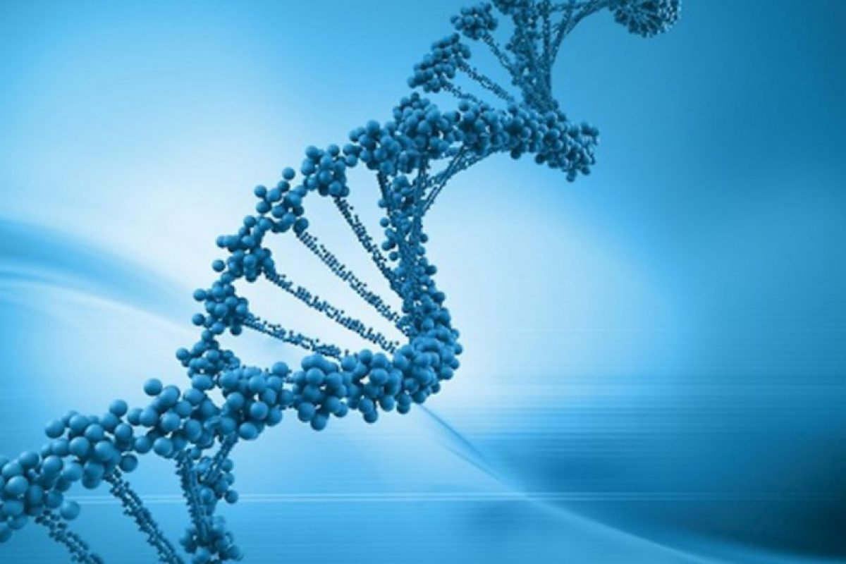 Genes neandertales tendrían que ver con padecimientos con diabetes tipo 2. Foto:Tumblr.com. Imagen Por: