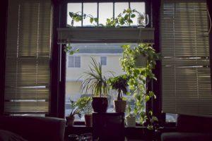 El departamento será más verde. Foto:Tumblr.com. Imagen Por: