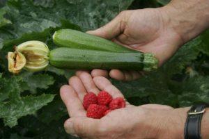 Ya podrán tener sus propios cultivos. Foto:getty images. Imagen Por: