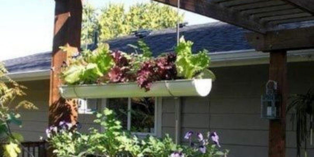 GALERÍA: Ideas para tener un huerto en casa
