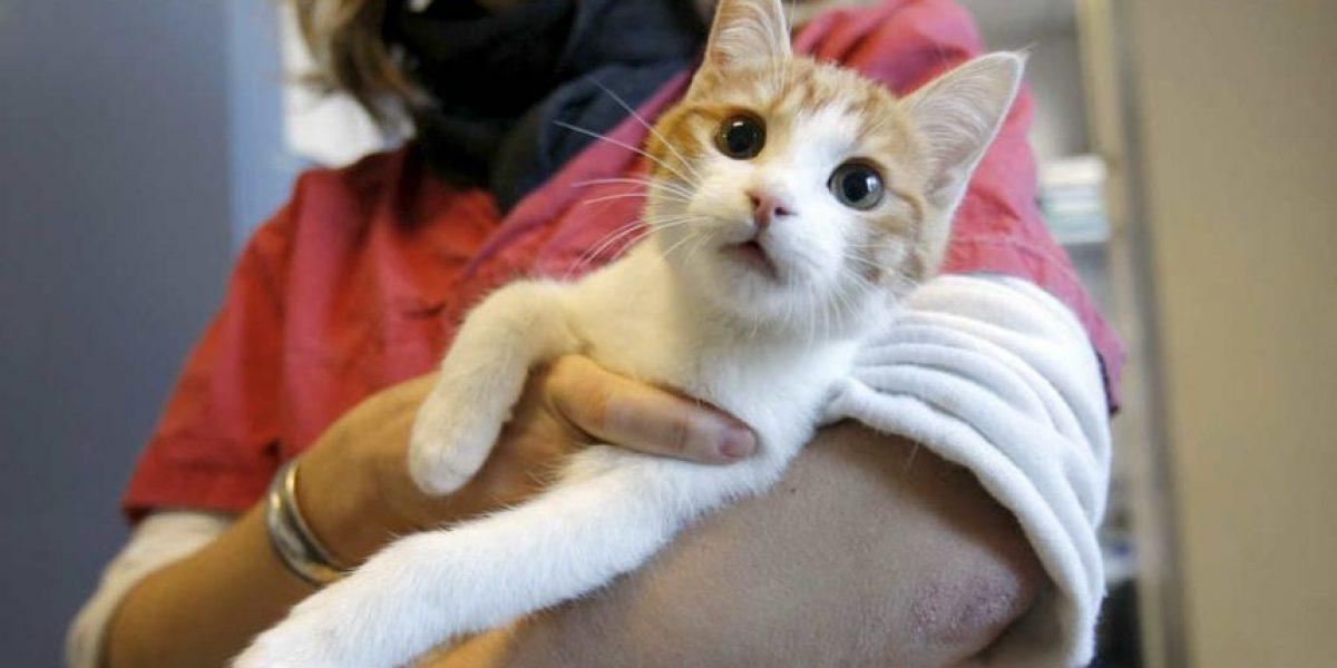 VIDEO: Francés va a la cárcel por maltratar a este lindo gatito