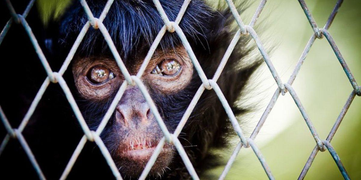 [Galería] Revisa las mejores imágenes del Zoológico Nacional del Parque Metropolitano