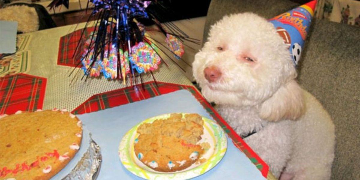 Los perros procesan las emociones como los humanos, según estudio