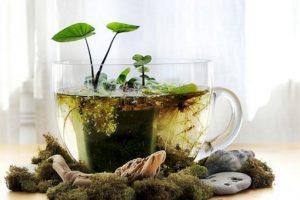 Cuidar una planta Foto:Tumblr. Imagen Por: