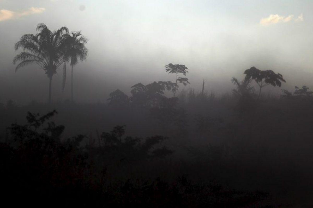 Llvia en selva amazónica Foto:Getty Images. Imagen Por: