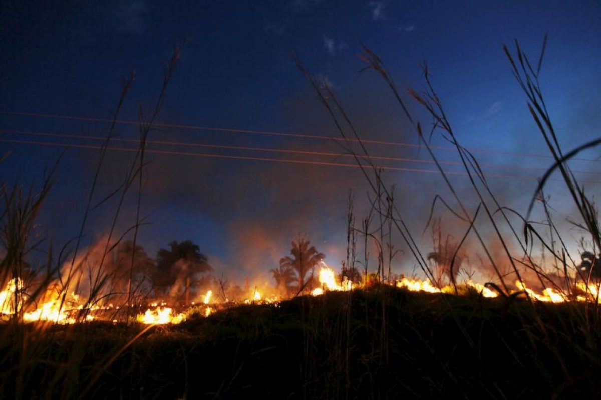 Incendio en selva autraliana Foto: Getty Images. Imagen Por: