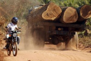Motociclista voltea a mirara el camión que carga algunos árboles recien talados Foto:Getty Images. Imagen Por:
