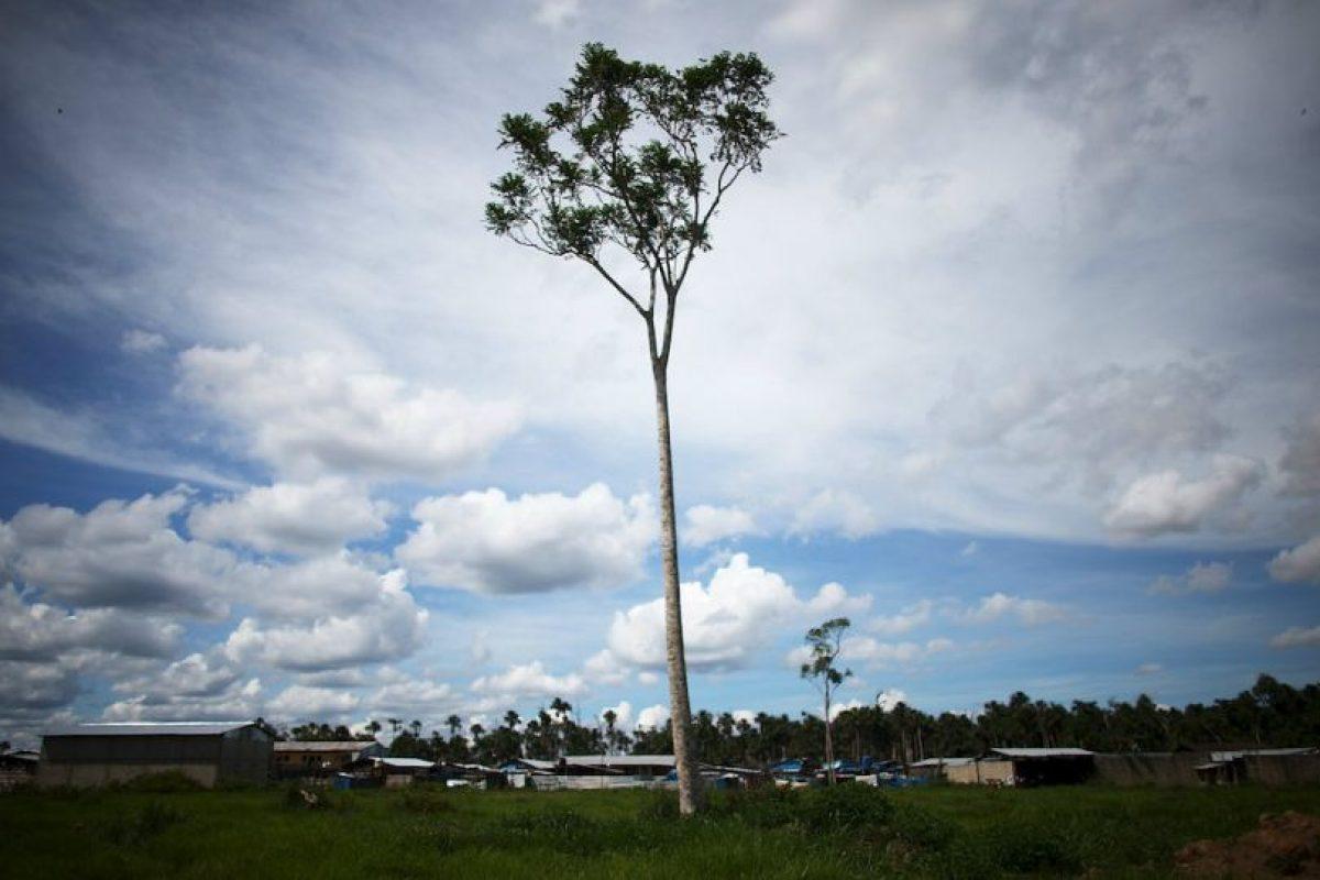 Un árbol solitario es lo que queda de una selva en Tailandia Foto:Getty Images. Imagen Por: