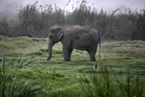 Elefante en selva Foto:Getty Images. Imagen Por: