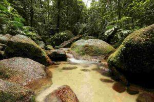 Un riachuelo se extingue en selva de Tailandia Foto:Getty Images. Imagen Por: