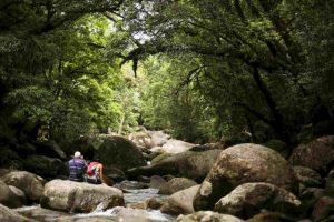par de turistas interbados en una selva en Australia Foto:Getty Images. Imagen Por: