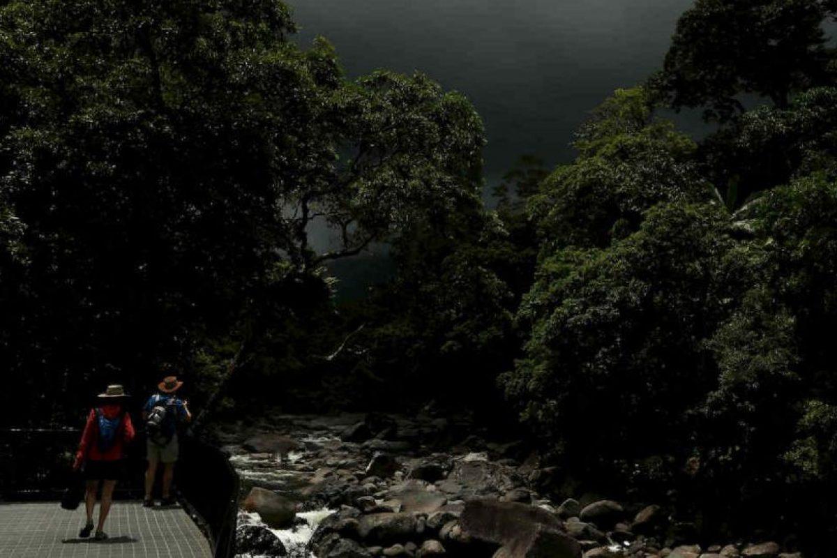 Turistas en selva australiana Foto:Getty Images. Imagen Por: