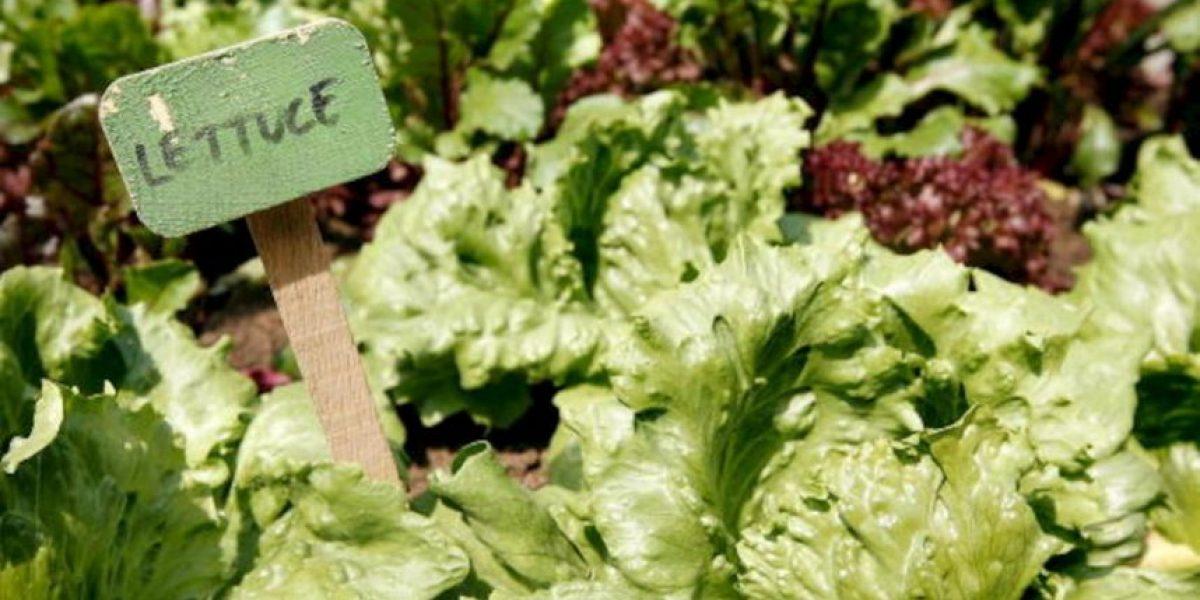 Estudio: Los alimentos orgánicos no disminuyen riesgo de padecer cáncer