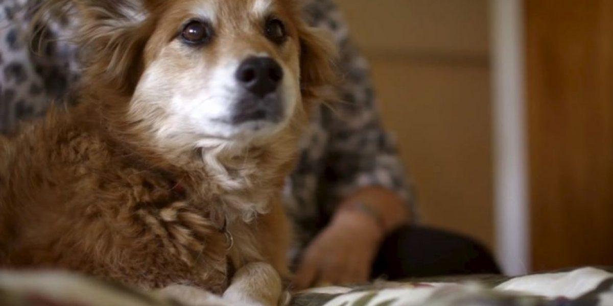 Video: Perro detecta cáncer en su dueña y le salva la vida