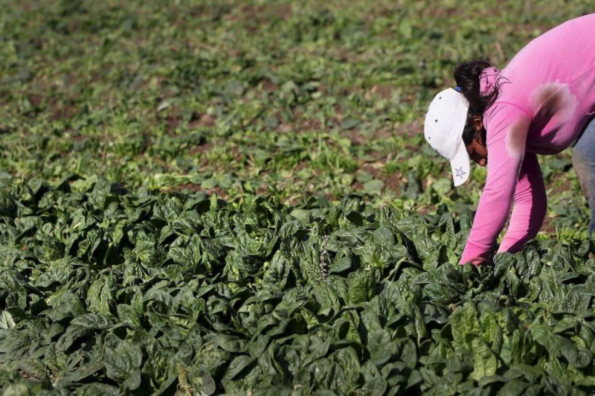 La espinaca también tiene vitamina C, que facilita la producción de colágeno. Foto:Getty. Imagen Por: