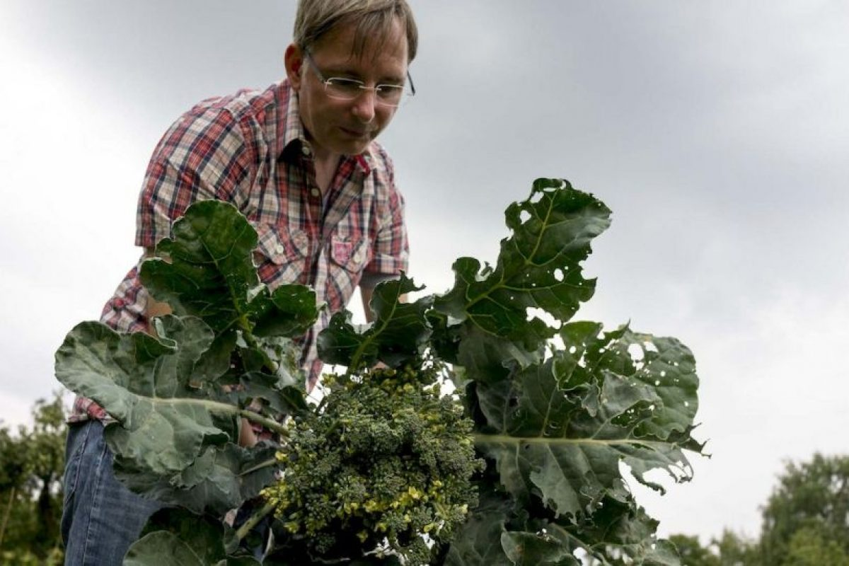 Asimismo, el brócoli contiene vitaminas, A, B, E y K. Foto:Getty. Imagen Por: