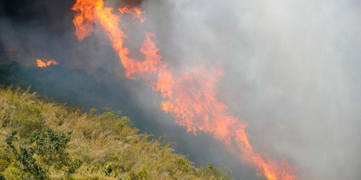 Incendio forestal amenaza con consumir zona residencial en Ruta Las Palmas de Viña del Mar