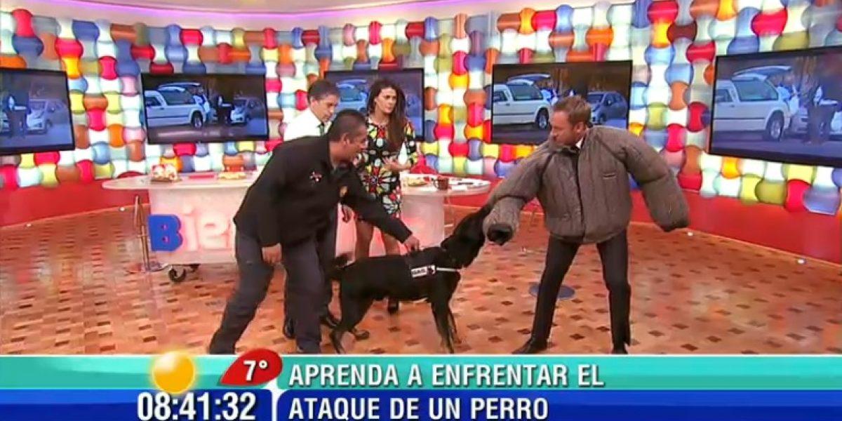 Martín pasó susto con actividad con un perro en