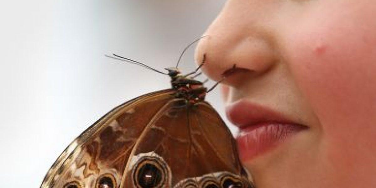 Cinco curiosidades sobre la nariz que quizás no sabías