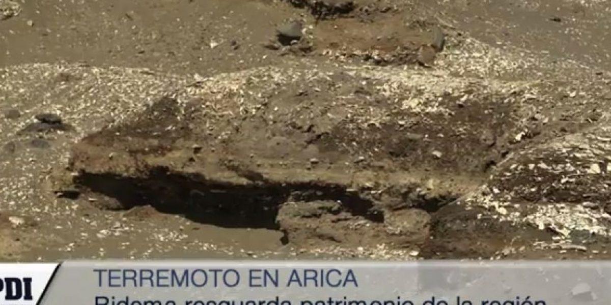 Momias chinchorro quedan a la vista luego del terremoto
