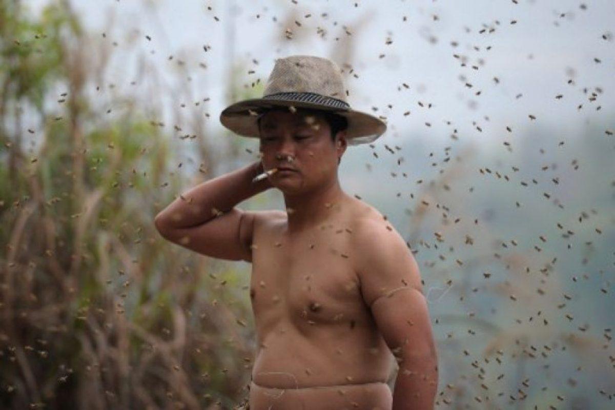 En las primeras ocasiones ocupó 15 colmenas Foto:AFP. Imagen Por: