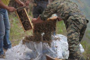 Recibió ayuda de cinco de sus amigos apicultores Foto:AFP. Imagen Por: