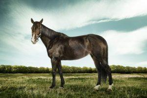 Los caballos son otros actores comunes en estas prácticas. Foto:Getty. Imagen Por:
